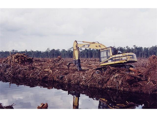 Rainforest destruction, Indonesia, causes major pollution [Rainforest Action Network]